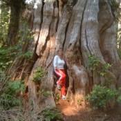bio-tree